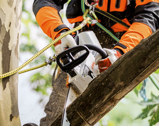 Tree Climbing & Arboriculture
